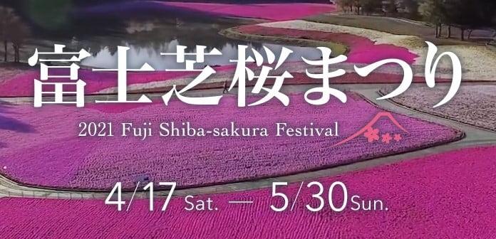 shibazakura , shibasakura