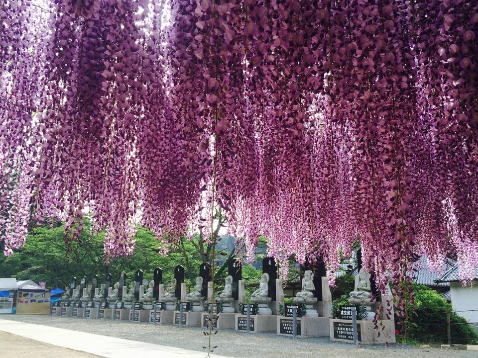 Estatuas y wisterias en el Byakugouyi Temple