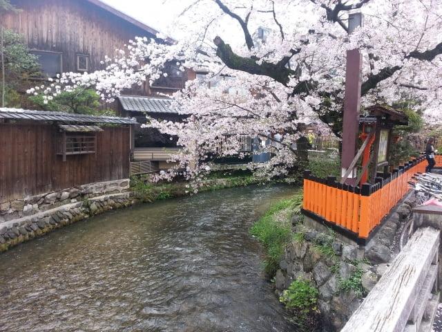 Kyoto Gion Sakura en Shirakawa Nara