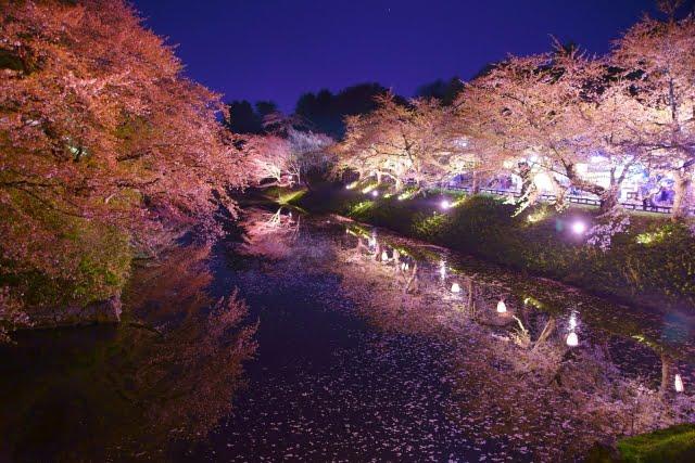 Cherry blossom festival aomori hirosaki castle