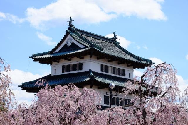 Hirosaki Castle y flores del cerezo en Aomori hanami