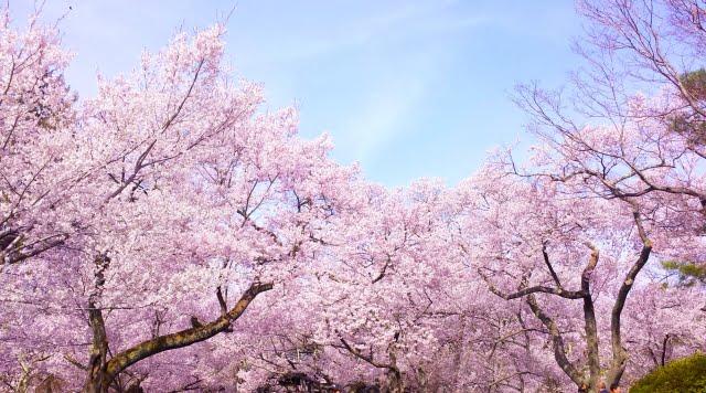 clima japon marzo