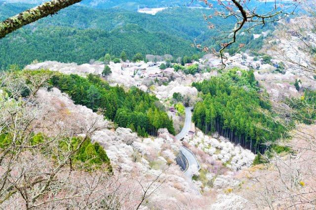 30.000 cerezos en flor desde vista aérea del Monte Yoshino unesco nara