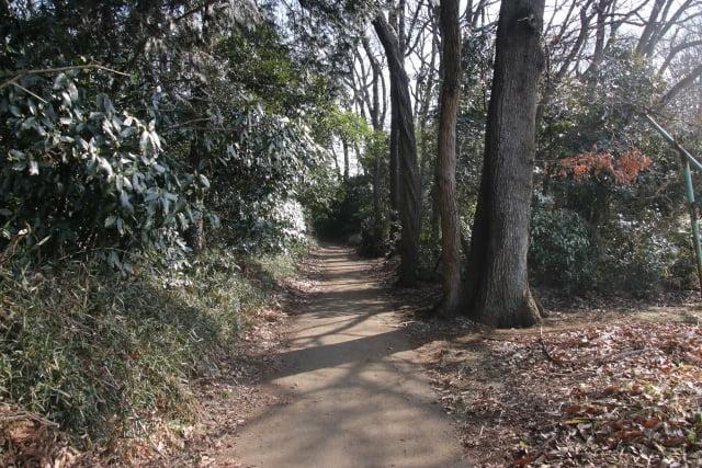 camino bosque totoro lago sayama