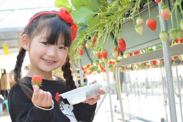 果物屋  ichigo