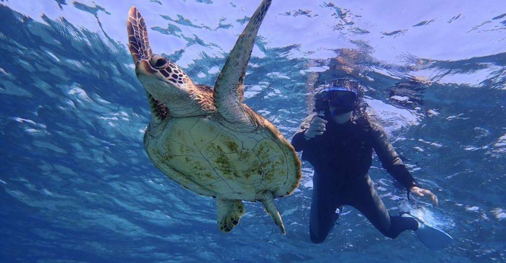 miyako island bucear tortugas japon